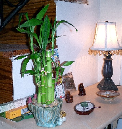 new bamboo!  all happy and pretty!